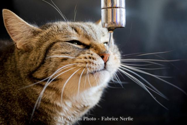 Photo Portrait Animaux Chat-Fabrice Nerfie-4